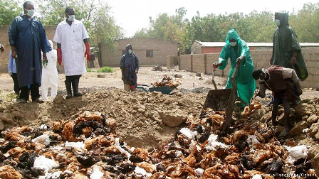 Bird flu kills 11,000 birds in 6 Plateau farms