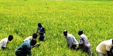 Nigeria government to empower 30,000 youths in Agriculture